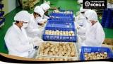 Lễ khánh thành nhà máy sản xuất Tỏi Kim Cương Đông Á số 1